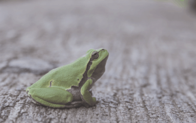 When 'Eating the Frog' Won't Work
